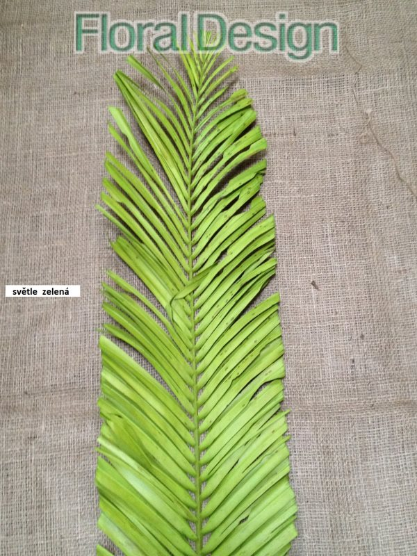 Palm leaves oval 1,5m