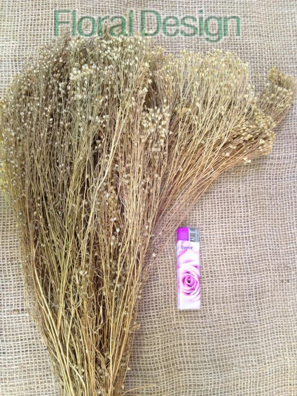 Broom Bloom 100gr.natur